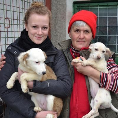 Volunteer and staff with animals in Romania as they work at a local shelter